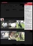 Dateivorschau: Volxstimme_0208_scr_19.pdf