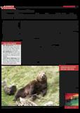 Dateivorschau: Volxstimme_Nov08_scr_12.pdf