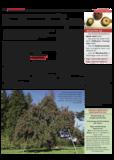 Dateivorschau: VolxstimmeSept08_scr_21.pdf