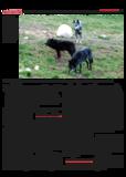 Dateivorschau: Volksstimme_Nov06_scr06.pdf