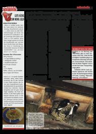 Dateivorschau: Volxstimme_Stamm_scr_20.pdf
